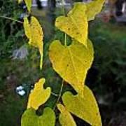 Yellow Heart Leaves Photoart II Art Print