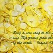 Yellow Hydrangea Isaiah 42v10 Art Print by Linda Phelps