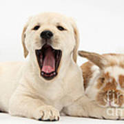 Yellow Lab Puppy With Rabbit Print by Mark Taylor