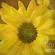 Yellow Mums Art Print