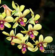 Yellow Orchid Cascade Art Print