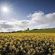 Yellow Rapeseed Field, Newgrange Art Print