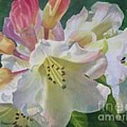 Yellow Rhododendron With Buds Art Print