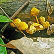 Yellow Sandpaper Mushrooms Art Print