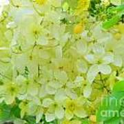 Yellow Shower Tree - 5 Art Print