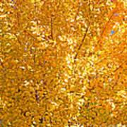 Yellow Tree Leaves Art Print