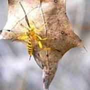 Yellow Wasp Art Print