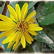 Yellow Wildflower Art Print