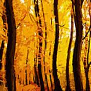 Yellow Wood Art Print
