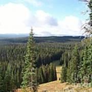 Yellowstone High Elevation Forest Art Print