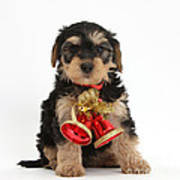 Yorkipoo Pup Wearing Christmas Bells Art Print