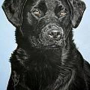 Young Black Labrador Art Print