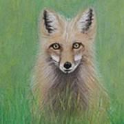 Young Fox Art Print by David Hawkes