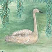 Young Swan Under Willow Tree Art Print