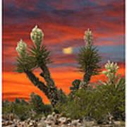 Yucca Blooming Sunset-moonset Art Print