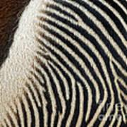 Zebra Caboose Art Print