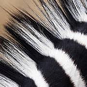 Zebra Equus Quagga Mane, Khama Rhino Art Print