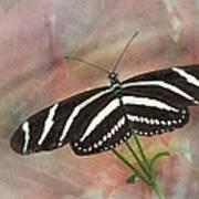 Zebra Longwing Butterfly-3 Art Print