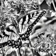 Zebra Wings Art Print