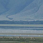 Zebras And Pink Flamingos, Ngorongoro Art Print