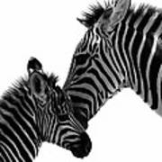 Zebras Mom And Baby Art Print