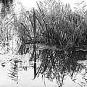 Zen Pond Art Print