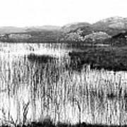 Zen Pond In Ireland Art Print
