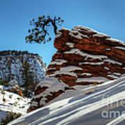 Zion National Park In Winter Art Print