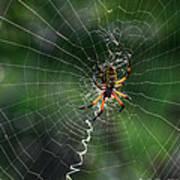 Zipper Spider Art Print