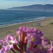 Zuma Beach Wildflower Art Print