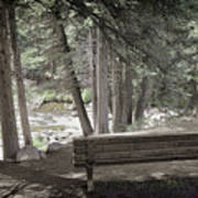 Bench By The Stream Art Print
