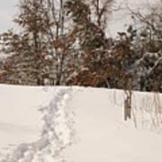 Christmas Snow Trail Art Print
