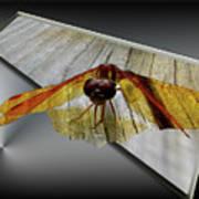 Eastern Amber Dragonfly 3d Art Print