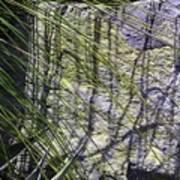 Grass And Stone  Art Print