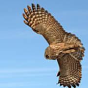 Great Gray Owl Plumage Patterns In-flight Art Print