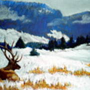 High Country Elk Art Print