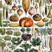 Illustration Of Vegetable Varieties Art Print