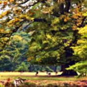 Landscape Under A Big Oak In Autumn Art Print