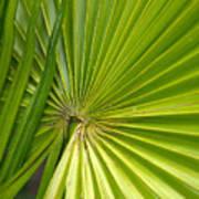 Spiny Fiber Palm Art Print