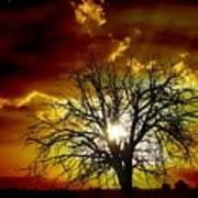 '' Sunset Tree ''  Art Print