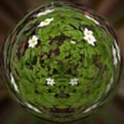 This Little Anemone  Planet 4 Art Print