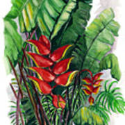 Tiger Claw .. Heliconia Art Print