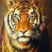 Tiger Head, Color Oil Painting On Canvas. Art Print