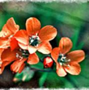 Wildflowers 5 -  Polemonium Reptans  - Digital Paint 3 Art Print