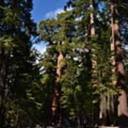 Yosemite Sequia Art Print