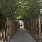 0171- Bamboo Walkway Art Print