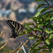 0518- Butterfly Art Print