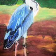 08282016 Female Blue Heron Art Print