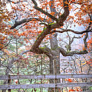 0981 Fall Colors At Starved Rock State Park Art Print