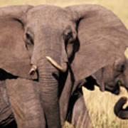 1-elephant Art Print